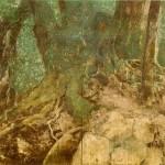 アラカシの庭